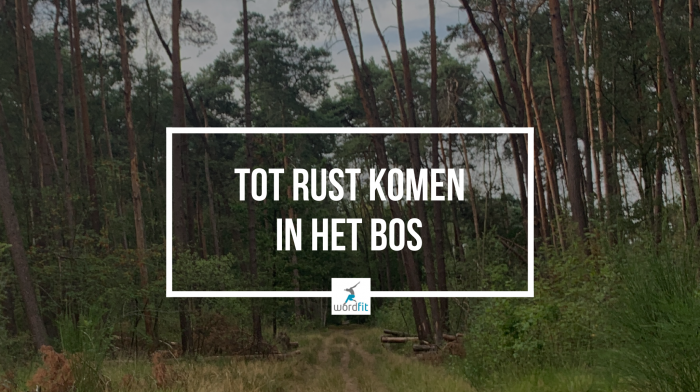 Tot rust komen in het bos WordFit.be Lifestylecoaching